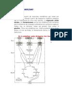 Catabolismo Anabolismo Completo