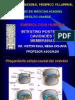 2_intestino Posterior, Cavidades y Membranas