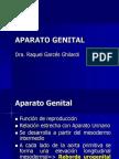 Aparato Genital