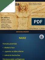HM- Anatomia PDF