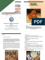 Publicación Gallinas