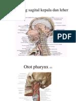 pharynx-larynx.ppt