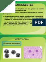 SARCOCYSTIS-1.pptx