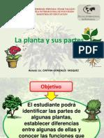 la-planta-y-sus-partes-1233156500731687-1 (1)