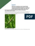 Plantas acuaticas y depuradoras.docx