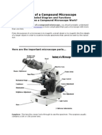 Parts of a Compound Microscope