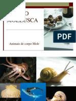 5 Filo Mollusca