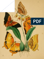 Butterflies in Chinese Culture