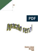 Aparato renal