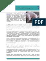 Alerta Mundial Por Epidemia...Gripe Porcina