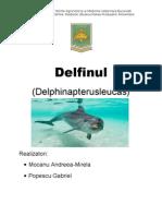Proiect Delfinul Bun de Dat
