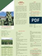 1995. Quinua Cultivar Salcedo INIA. INIA._r.M