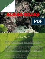 Algas Rojas Exposicion
