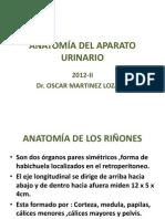 SEM 12 C-23 ANATOMÍA DEL APARATO URINARIO