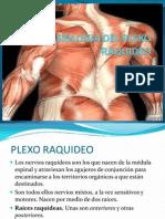 FISIOLOGIA DEL PLEXO RAQUIDEO.pptx