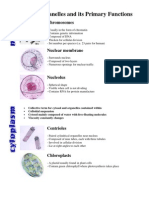 Cell Organelles and Its Primary Functions