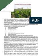 Regiuni_viticole