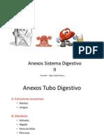 19b. Anexos Sistema Digestivo