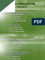 tema4-msculosdeltronco-110505102959-phpapp02