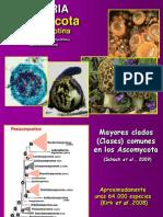 Ascomycota pezizomycotina