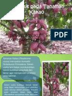 Penyakit Penting tanaman kakao
