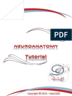 Neuro Anatomy Toutrial[1]