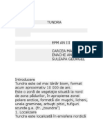Introducere Tundra