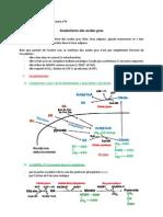Cours 9 - Anabolisme Des Acides Gras