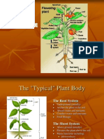 01.Plant Structure Nra