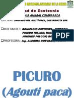 PICURO