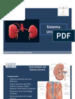 sistemaurogenital-111122123830-phpapp01