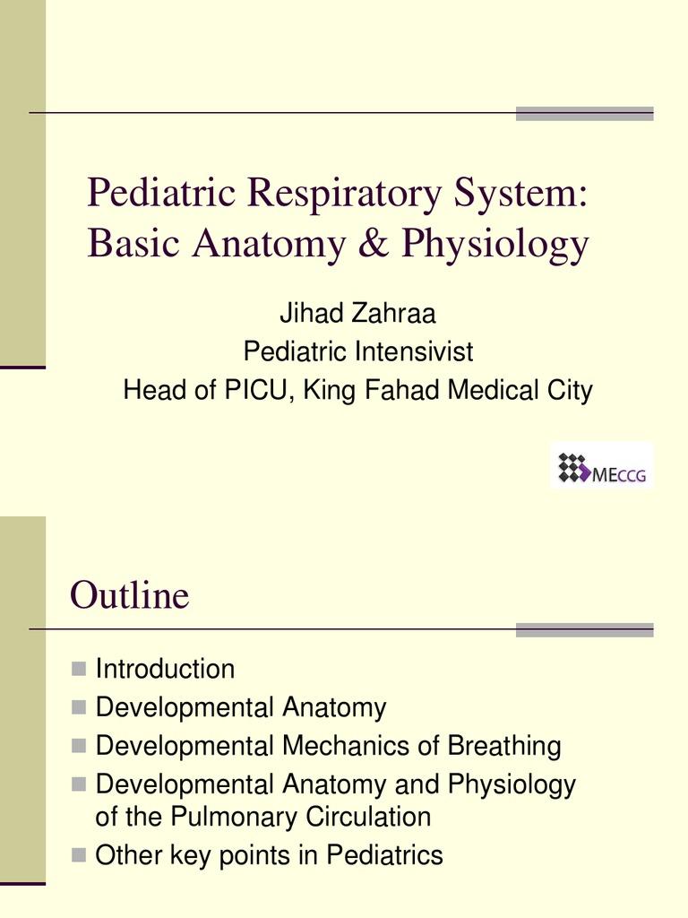 Peds Basic Anatomy Physiology   Respiratory Tract   Lung