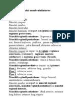Muschii Membrului Inferior