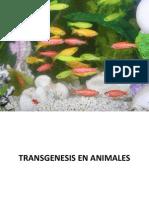 TRANSGENESIS EN ANIMALES.pptx