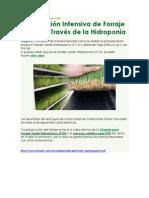 Producción Intensiva de Forraje Verde