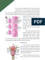 Referat Anatomi fisiologi tht