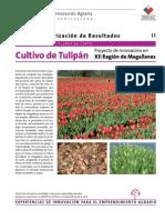 11 Ficha Tulipan