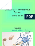 Chapter 33-1 The Nervous System