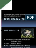 ikan hiasan.