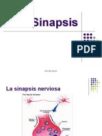 Sinapsis Quimica Ciclo Vital de Un Neurotransmisor 10