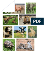 Animales Acuaticos, Terrestres y Aereo9s