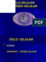 Ciclo Celular Mitose e Meiose