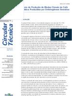 Circular-Tecnica-3 Custo Clonagem Cafe
