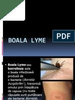 134000416-Boala-Lyme