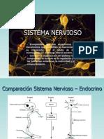 Sistema Nervioso (Organizacion Yfuncion)