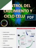 1. Control Del Crecimiento y Ciclo Celular