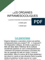 Les Organes Inframesocoliques Anatomie Pathologies Traitements