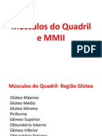 Musculos Do Quadril e Membro Inferior