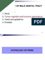 1. Penis