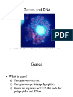 4 - Prokariotik and Eukariotik Genes